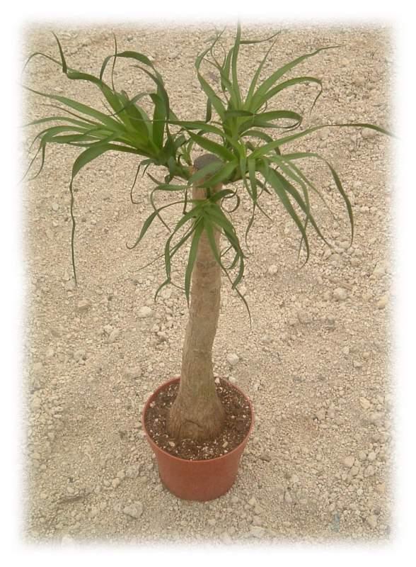 Comprar Planta en Macetero
