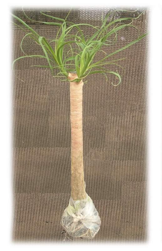 Comprar Planta en Bolsa