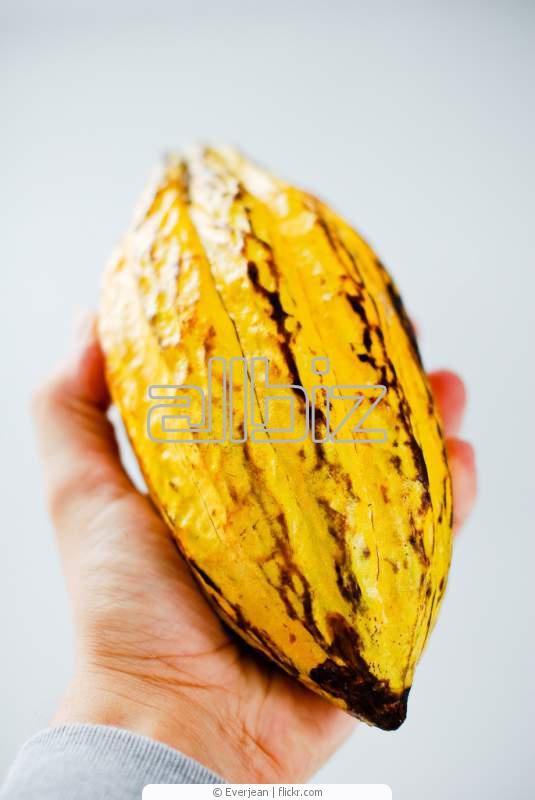 Comprar Granos de Cacao Criollo