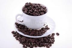 Café Oro Verde