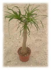 Planta en Macetero