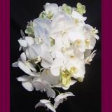 Orquídea de Amor