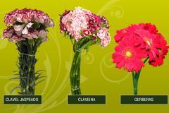 Claveina