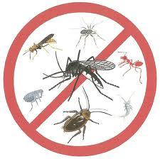 Insecticida