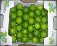 Limón tamaño 500