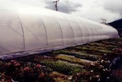 Plásticos Para Invernadero Antiblackening