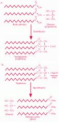 Esteres de ácidos grasos