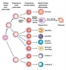 Hematología, Urología, Microbiología, Química Sanguínea, Drogas de Abuso pruebas de Paternidad