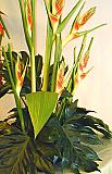 Arreglo floral Canasta Valeriana