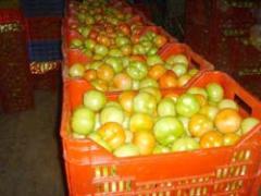 Tomate Manzano Diámetro 6.5cm