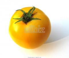 Tomate Multiuso