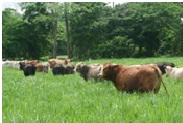 Herbicidas Para Potreros