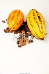 Granos de Cacao Forastero