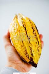 Granos de Cacao Criollo