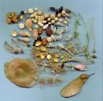 Semillas de Plantas Ornamentales