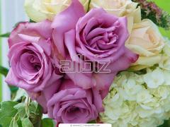Rosas en Cajas Medianas