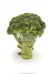 Brócoli Fresco Manojos