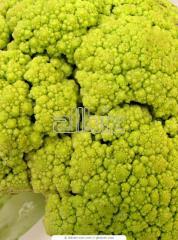 Brócoli Fresco Floret