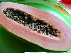 Papaya Tainung