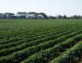 Fertilizante Pro-Fosforo