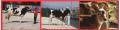 Nutrimento Para Vacas Lecharina 5000
